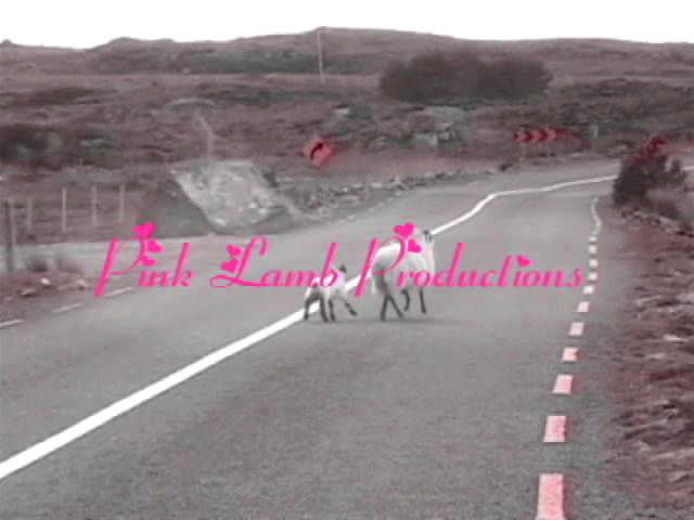 Pink Lamb Productions